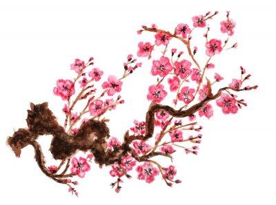 Plakat Kwitnienia oddział sakura. Pojedynczo na białym tle