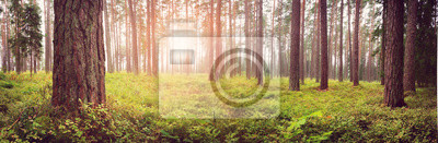 Plakat Lahemaa National Park Forest Panorama na początku września