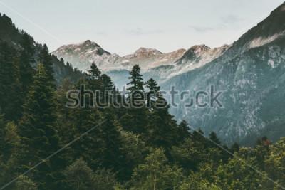 Plakat Las iglasty i góry Krajobraz Podróż spokojny krajobraz lato zieleń