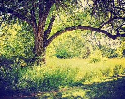 Plakat las lub park z drzew z liści jesienią zrobić z retr