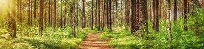 Plakat las sosnowy panorama w lecie. Ścieżka w parku