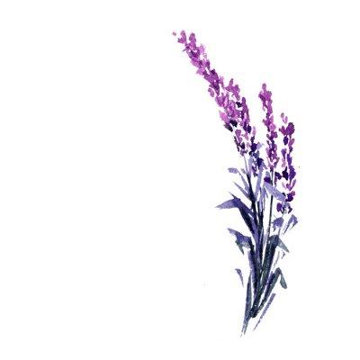 Plakat Lawendowa kwiat akwarela ilustracja. Prosta gałąź lawendy. Ślub i Walentynki karty z pozdrowieniami kwiatowy wzór. Miłość i małżeństwo. Pojedyncza gałązka lawendy. Raster na białym tle