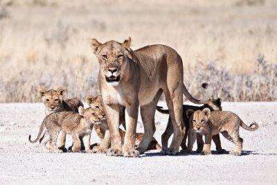 Plakat Lioness i Cub
