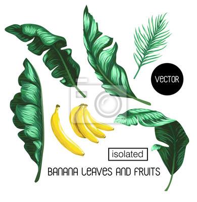 liści bananów i owoców samodzielnie