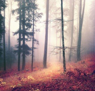Plakat Magia sezon jesienny las drzewo kolor tła z jasnym pomarańczowym czerwonym szlaku. Piękne lasy sezonowych.