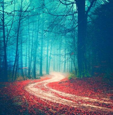 Plakat Magic vintage forest road