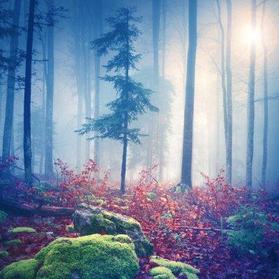 Plakat Magiczne światło w mglisty las ze słońcem