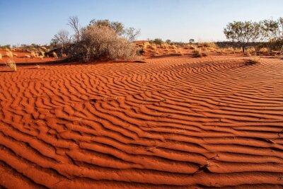 Plakat Małe rośliny na pustyni Zachodniej Australii