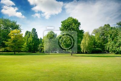 Plakat Malownicza zielona polana w parku miejskim. Zielona trawa i drzewa.