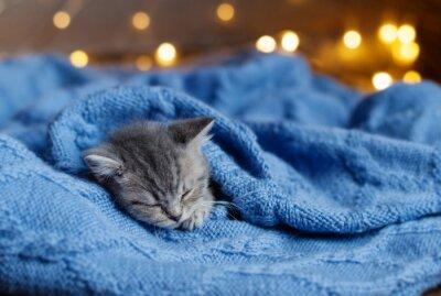 Plakat mały kotek śpi pod kocem