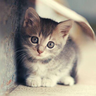Plakat mały słodki kociak umiejscowienia na zewnątrz