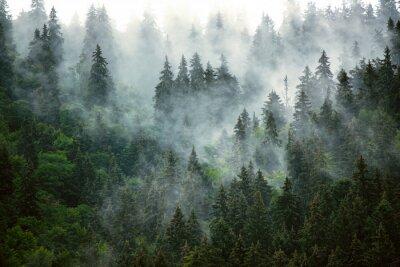 Plakat Misty mountain landscape