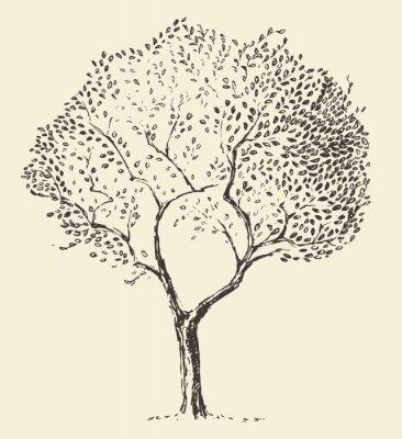 Plakat Młode drzewa oliwnego ilustracji wektorowych ręcznie rysowane