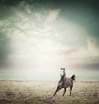 Plakat Młody koń działa na pastwisku na tle nieba, stonowanych