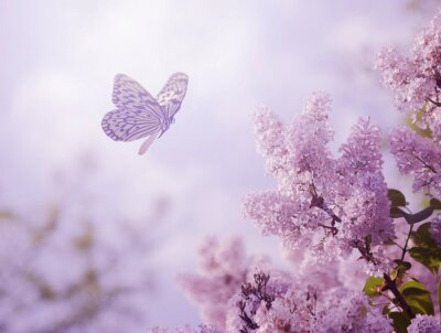 Plakat Motyl i kwiat
