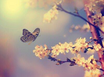 Plakat Motyl i kwiat wiśni