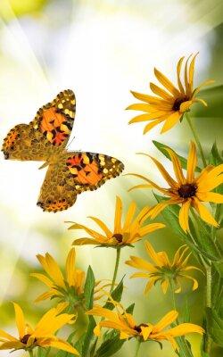 Plakat Motyl i kwiaty w ogrodzie zbliżeniu