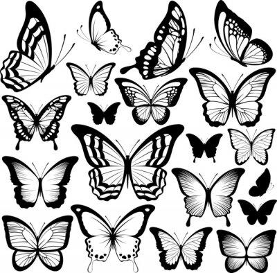 Plakat motyle czarne sylwetki