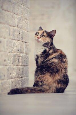 Plakat Multi-kolorowe kota w pobliżu ściany z cegły światła