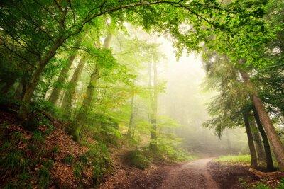 Plakat Naturalne brama drzew