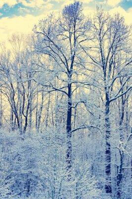 Plakat Nie zamrożony staw w zimie