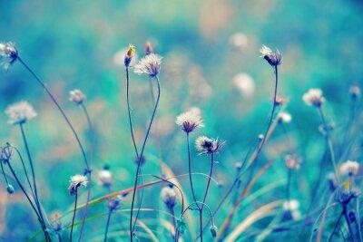 Plakat Niebieski rocznik pola ziołowy