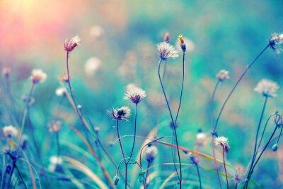 Plakat Niebieski rocznik pola ziołowy o wschodzie słońca