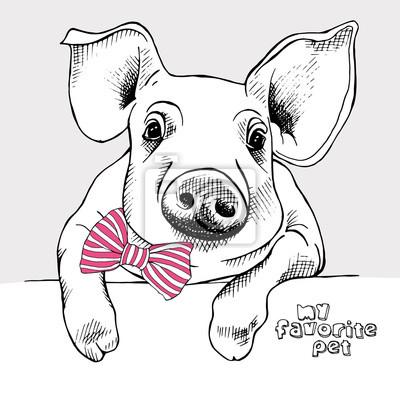 Obraz małej świni z łuku. ilustracji wektorowych.