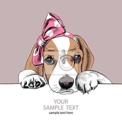 Obraz portret Beagle psa w pałąk. ilustracji wektorowych.