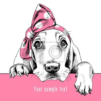 Obraz Portret pies Basset Hound w pałąk. ilustracji wektorowych.