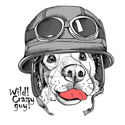 Obraz Portret psa Owczarek australijski w kasku motocyklisty. ilustracji wektorowych.