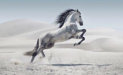 Plakat Obraz przedstawiający galopujący koń biały