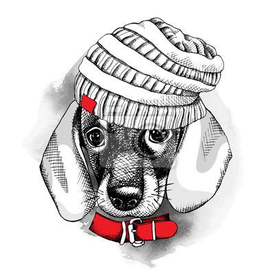 Obraz z portretem pies Jamnik w kapelusz z dzianiny iz kołnierzem. ilustracji wektorowych.