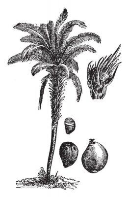Plakat Oil palm vintage illustration.