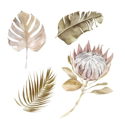 Plakat Old dry swirling tropical leaves and flower watercolor vector illustration isolated on the white background. Closeup view palm leaf in boho style. Hand drawn leaves and protea in sepia color scheme.