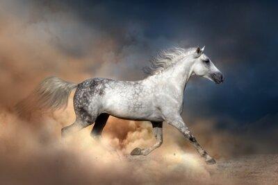 Plakat Orłow koń prowadzony w pyle
