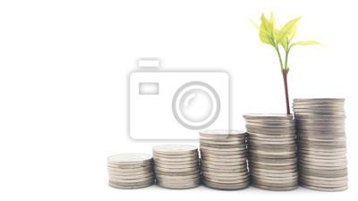 Oszczędność pieniędzy. Rosnąca roślina na monetach stosu na stałe białe tło