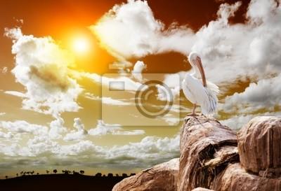 paisaje y Pelicano