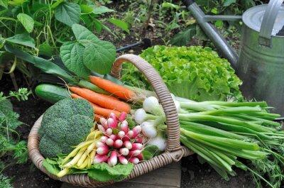 Plakat Panier de légumes frais dans potager