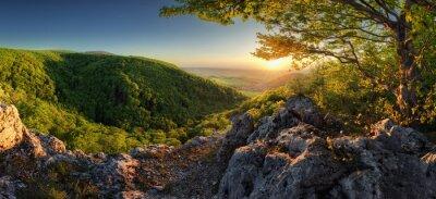 Plakat Panorama of spring with sun and tree, Slovakia