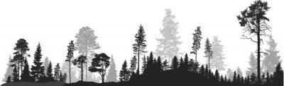 Plakat panorama wysokiej szarej jodły las na białym tle