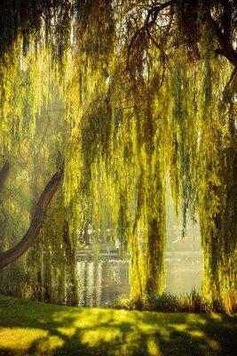 Plakat parku ze stawem i wierzby