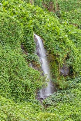 Plakat paroi humide et verdoyante, Anse des Cascades, Ile de la Réunion