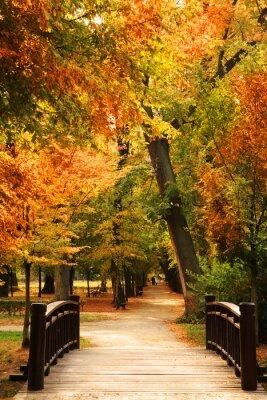Plakat Pasarela Parque del otoño