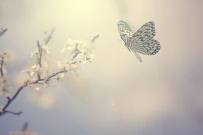 Plakat Pastel kolorowe zdjęcie wiosennych kwiatów i motyli