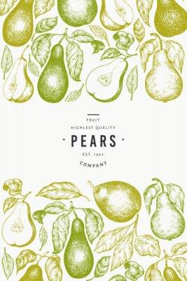 Plakat Pear design template. Hand drawn vector garden fruit illustration. Engraved style garden fruit frame. Retro botanical banner.