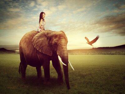 Plakat piękna kobieta siedzi na słoniu