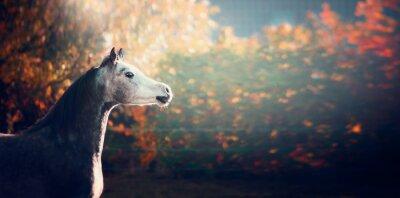 Plakat piękna koni arabskich z białą głową na tle wspaniałej przyrody