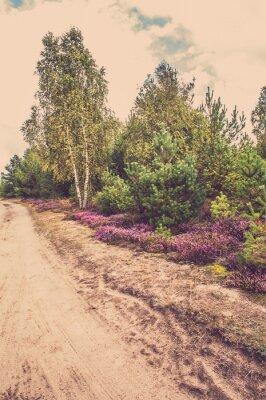 Plakat Piękna krajobrazu wiejskiego z kwitnących wrzosów