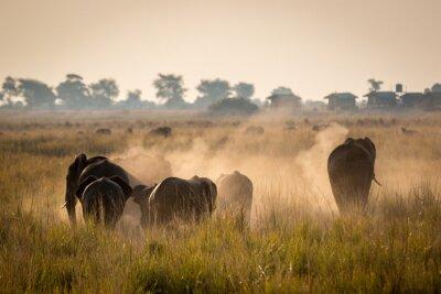 Plakat Piękna przyrody w Parku Narodowym Chobe, Botswana